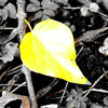 yellow_leaves-100x100